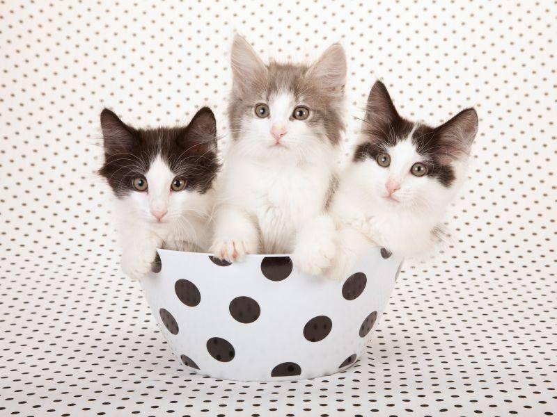 Alle mal zusammenrutschen, dann passen Katzenbabys auch zu dritt in eine Schüssel — Bild: Shutterstock / Linn Currie