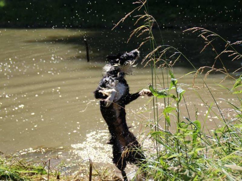 Hund-Rocky-Kanal-Spielen