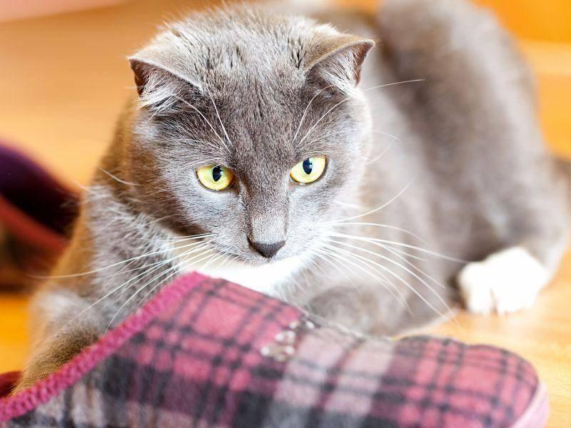 Besonders beliebt bei Katzen: Kuschelig weiche Hausschuhe — Bild: Shutterstock / motorolka