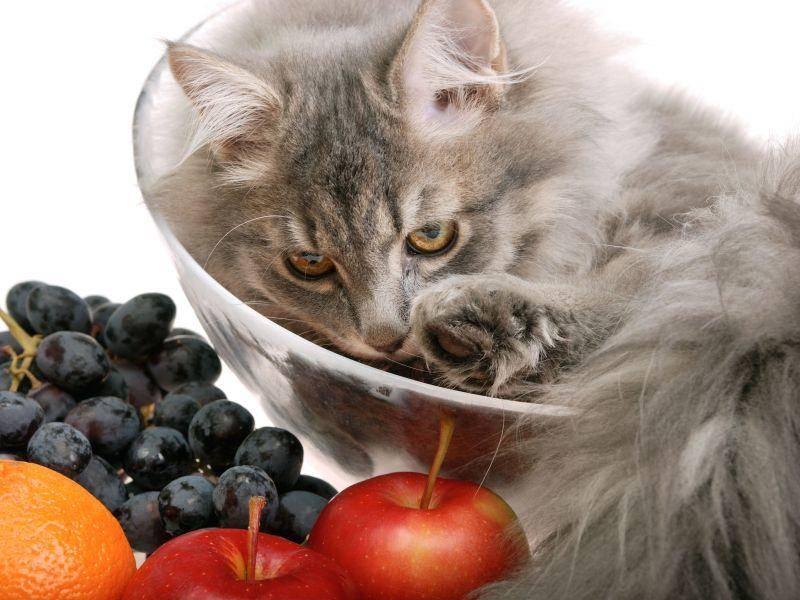 Das Obst auf dem Tisch, die Katze in der Schüssel: Irgendwas ist da schief gelaufen — Bild: Shutterstock / Dmitriy Yakovlev