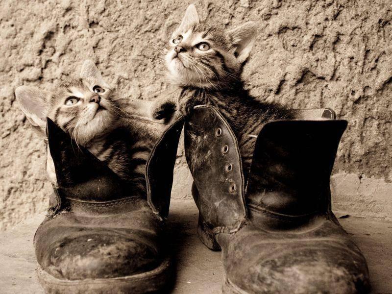 Katzen und Schuhe: Auch in Schwarzweiß so süß — Bild: Shutterstock / gladcov