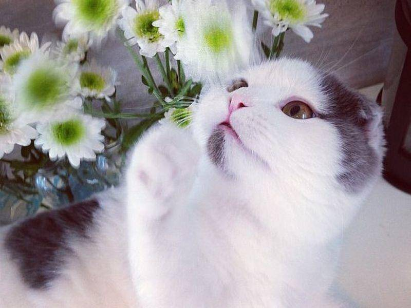 Und Blumen scheinen auf den schönen Kater eine gewisse Faszination auszuüben — Bild: 2013 Facebook / Eat your Kimchi
