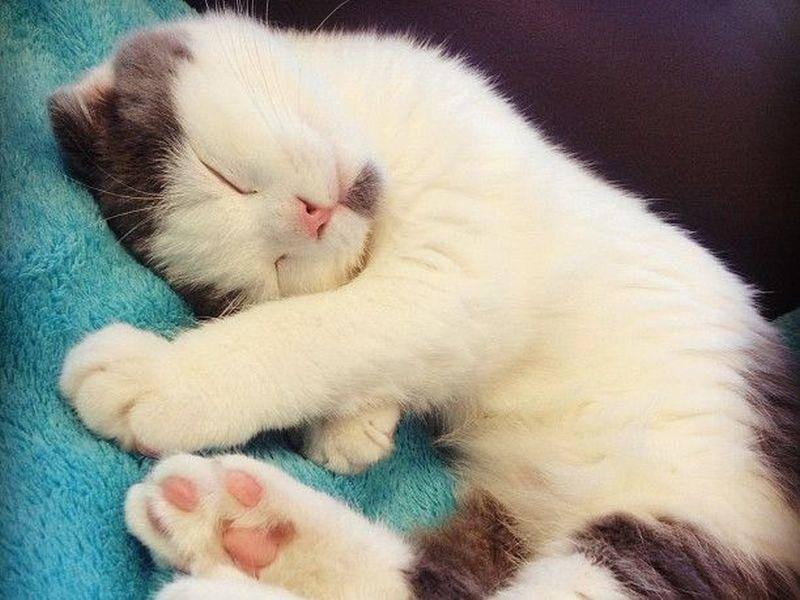 Auch im Schlaf ist Dr. Meemersworth zum Verlieben schön — Bild: 2013 Facebook / Eat your Kimchi