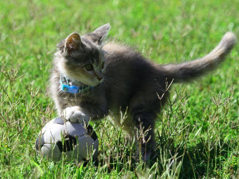 Katzenbaby-Fußball! Wer ist dabei? — Bild: Shutterstock / Dreamframer