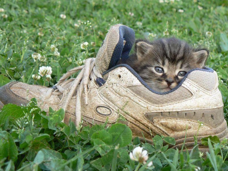 Alter Schuh: Gutes Versteck für kleine Katzen! — Bild: Shutterstock / apple1