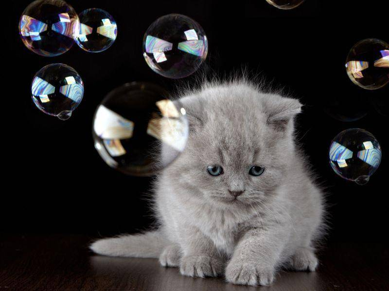 Schade, diese Bälle gehen immer kaputt: Süßes Katzenbaby mit Seifenblasen — Bild: Shutterstock / MaraZe