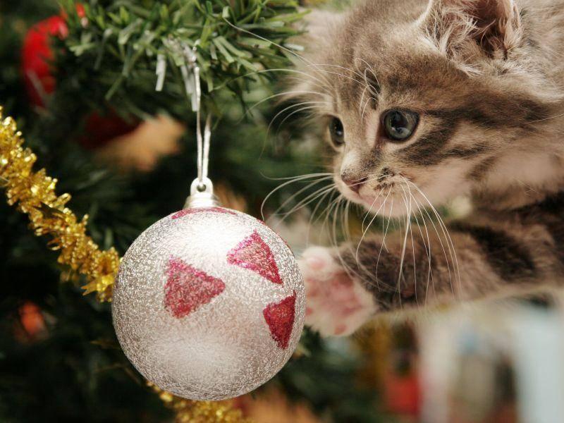 Katzenbaby auf Tour: Kann man mit so einem Ball auch spielen? — Bild: Shutterstock / Sue McDonald