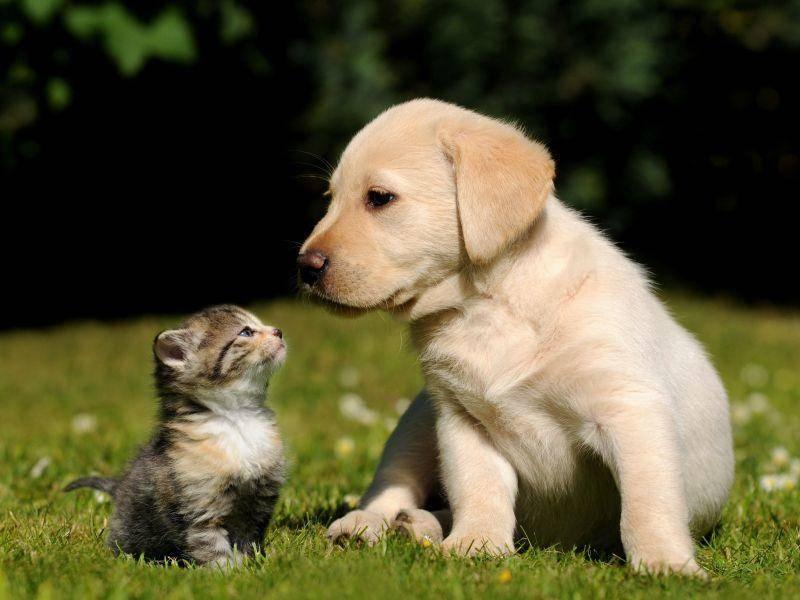 """Katze trifft Hund: """"Huch, was ist das denn?"""" — Bild: Shutterstock / Schubbel"""