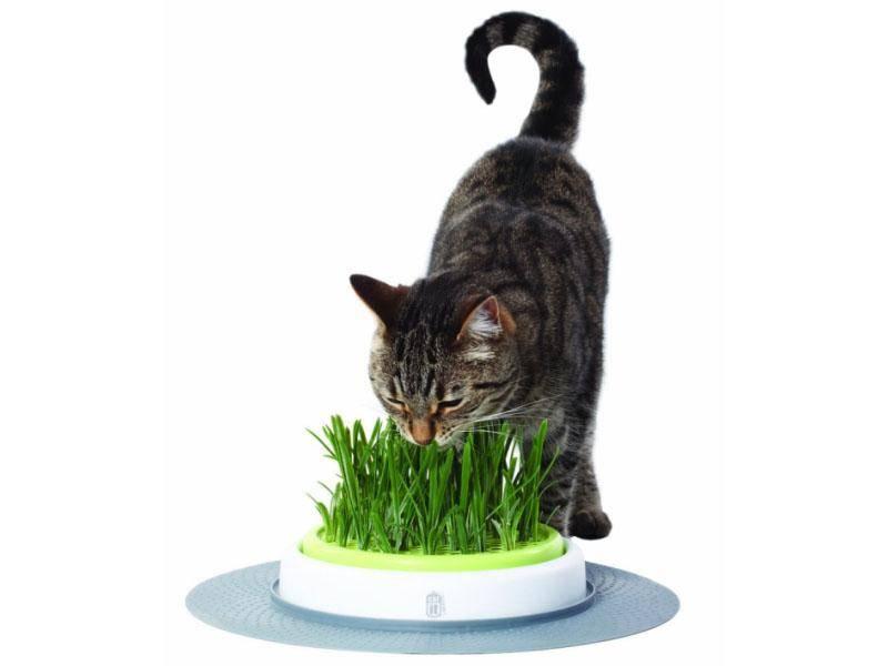 Katzengras — Bild: Amazon