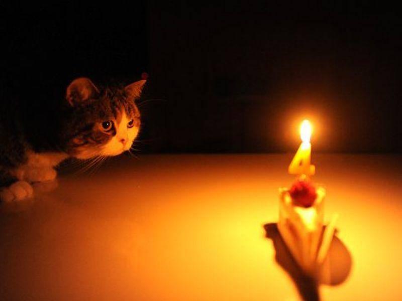 ... weil Maru schon einige Geburtstage gefeiert hat und trotzdem nie Erwachsen zu werden scheint — Bild: 2013 Facebook / Maru