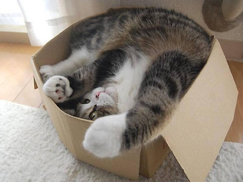 ... weil Maru keinen Hehl aus seiner Liebe zu Kartons macht — Bild: 2013 Facebook / Maru