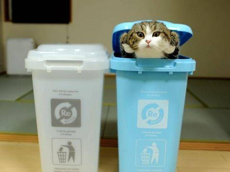 ... weil Maru sich so gern lustige Spiele ausdenkt, zum Beispiel in Mülltonnen tauchen — Bild: 2013 Facebook / Maru
