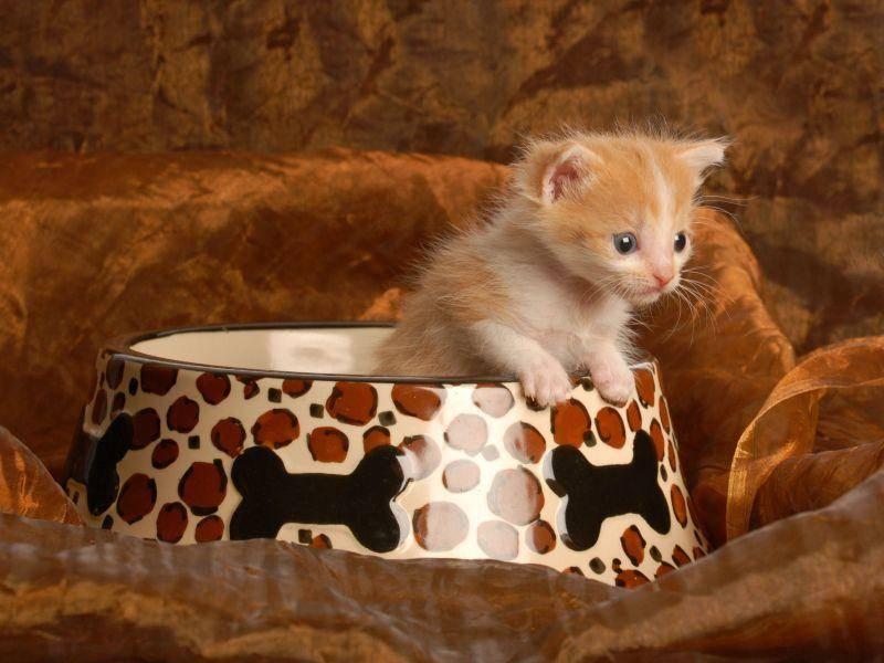 Spannend für ein Katzenbaby: Der Blick über den Teller- oder eher Schüsselrand — Bild: Shutterstock / WilleeCole