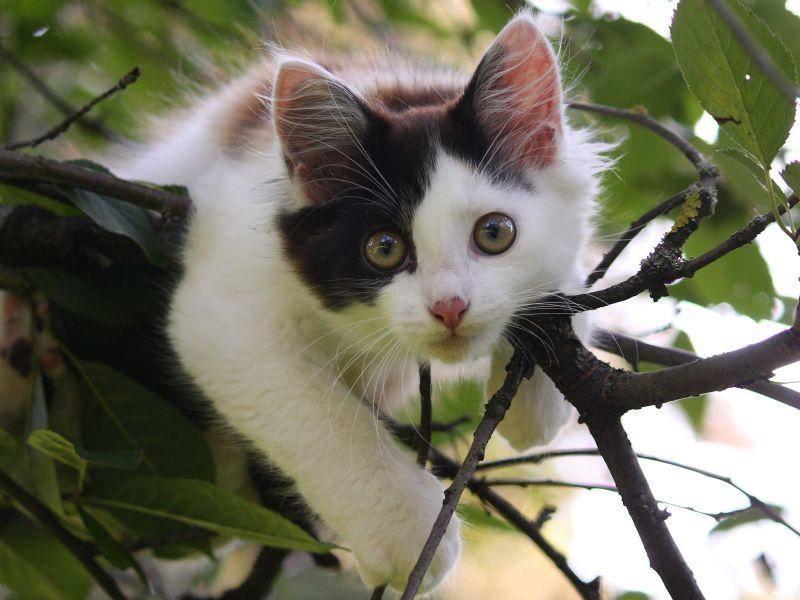 Klettern macht Spaß! Da sind sich wohl alle Katzen einig — Bild: Shutterstock / Anastasija Popova