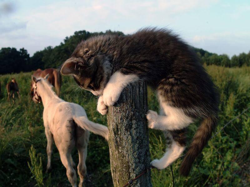 Wär doch gelacht, wenn diese Katze nicht auf die andere Seite vom Zaun klettern kann — Bild: Shutterstock / oleg kuzminov