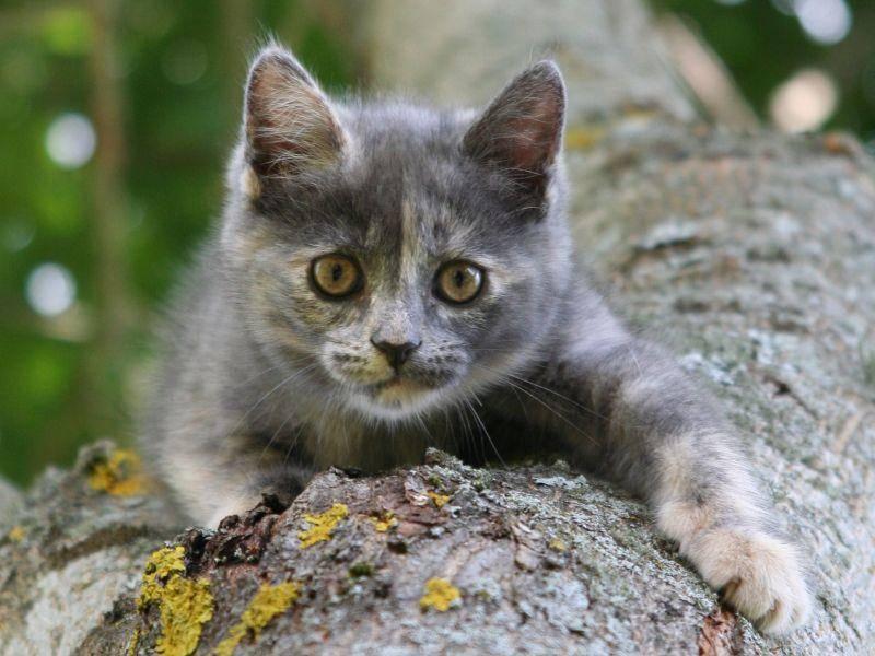 Kletterspaß: kleine Katze will hoch hinaus! — Bild: Shutterstock / oleg kuzminov