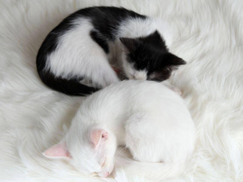 Zum Schluss noch zwei echte Teppichkuschler: Gute Nacht ihr zwei Süßen — Bild: Shutterstock / Africa Studio
