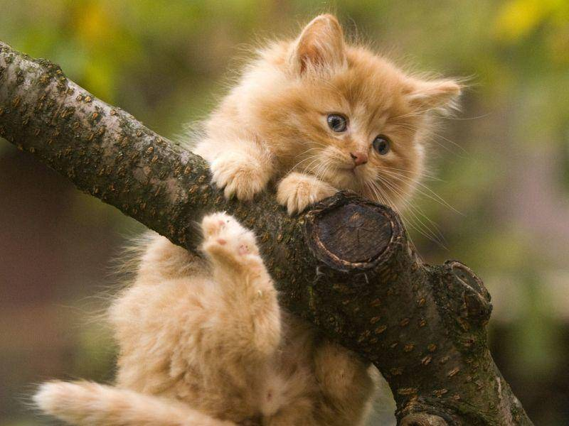"""""""Raufklettern ging leicht - aber wie komm ich jetzt wieder runter?"""" — Bild: Shutterstock / hosphotos"""