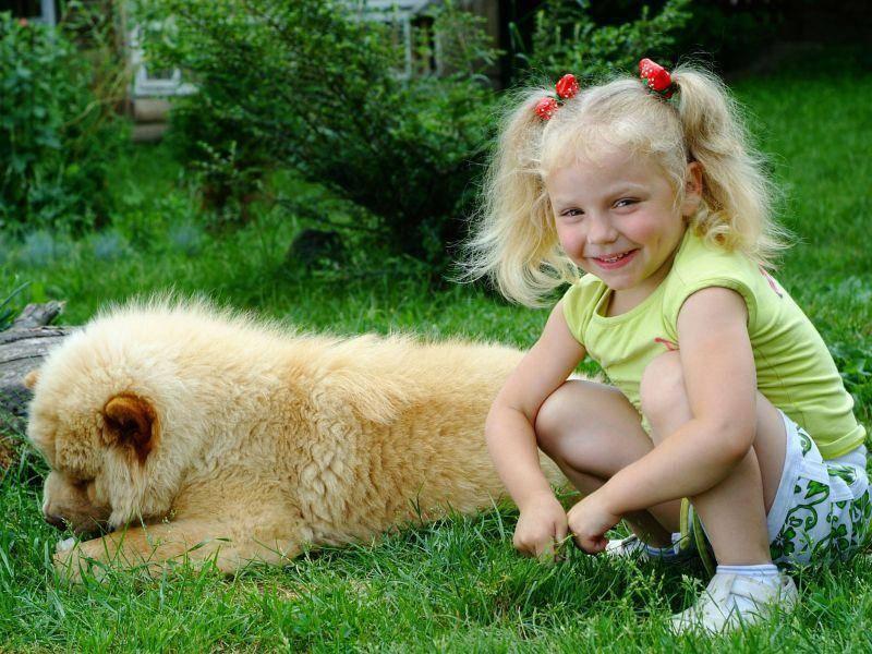Liebt seinen Besitzer: Der Chow-Chow ist ein besonders treuer Hund — Bild: Shutterstock / euko