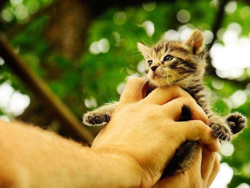 Hab dich! Eine handvoll Kätzchen bei einem seiner ersten Ausflüge — Bild: Shutterstock / Vinogradov Illya