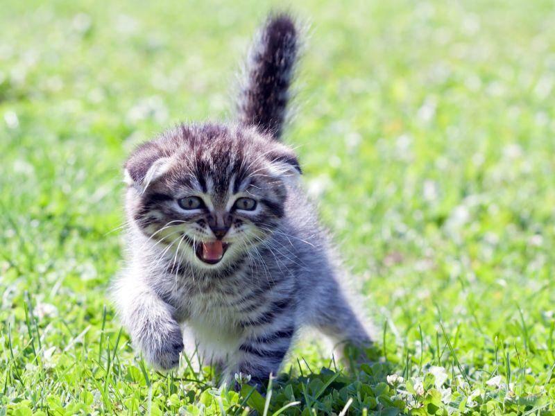 """""""Miau, wenn ich erstmal groß und stark bin!!!"""" — Bild: Shutterstock / Ivan1981Roo"""