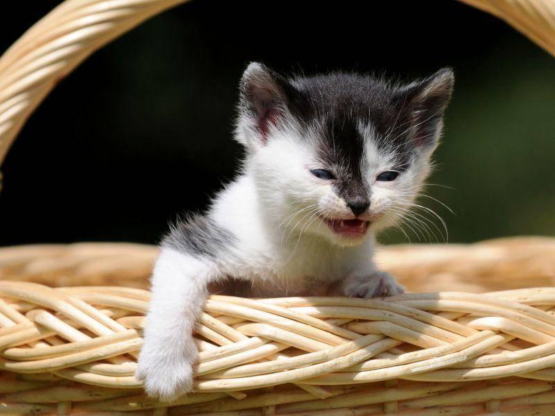 Süßes Körbchen, süße Katze, süßes Miau — Bild: Shutterstock / Schubbel