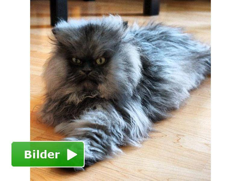 Colonel-Meow-Bilderbutton