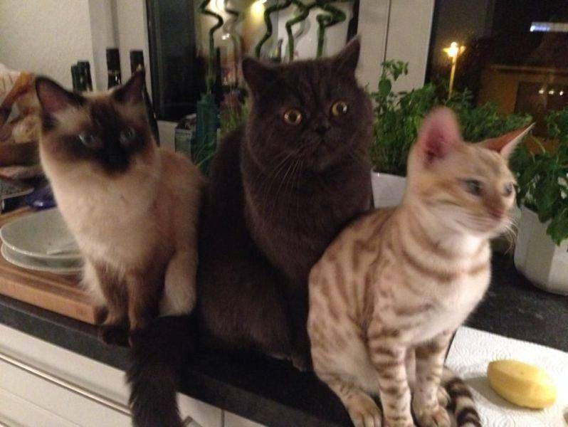 Nala, Jack und Tayo — Bild: Nina Roesgen