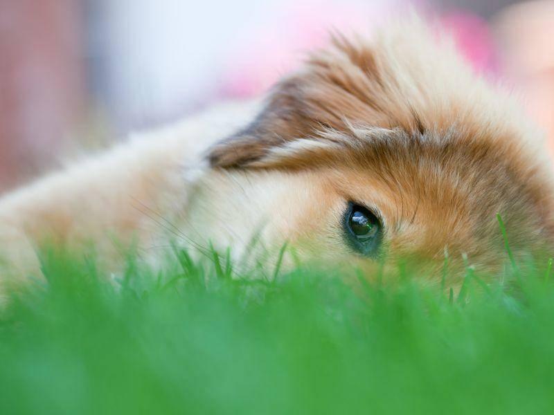 Ein toller Hund und ein Freund, mit dem man durch dick und dünn gehen kann: Der Elo — Bild: Shutterstock / Christian Mueller