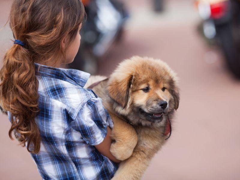 Als Familienhund eignet sich der Elo perfekt, denn er ist sehr kinderlieb — Bild: Shutterstock / Christian Mueller