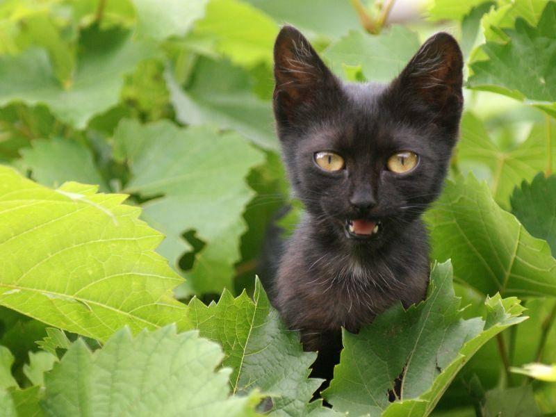 Warten, bis es dunkel wird? Schwarze Katze auf Tour — Bild: Shutterstock / Joerg Beuge