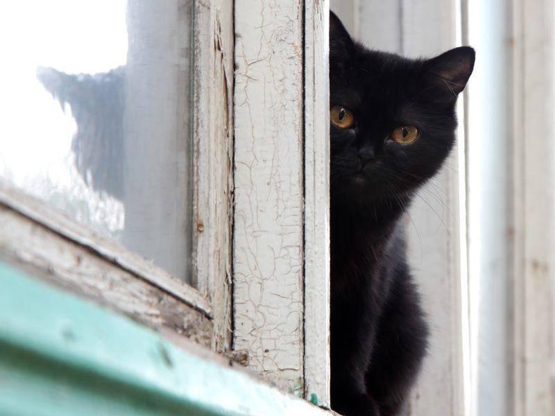 Pläne schmieden für Halloween? Schwarze Katze in Ausguck-Position — Bild: Shutterstock / TRIG