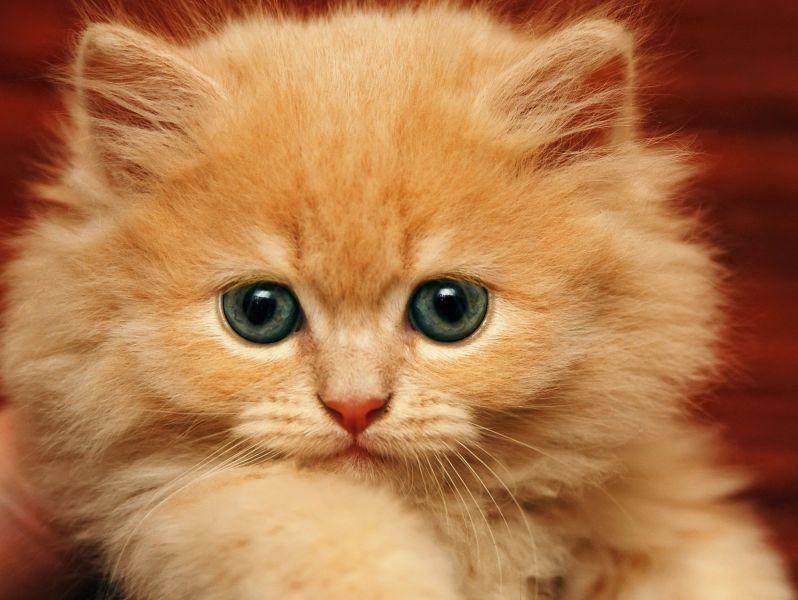 Und wer das Herz der liebevollen Katze erobert hat, hat einen Freund fürs Leben — Bild: Shutterstock / Zhukov Oleg