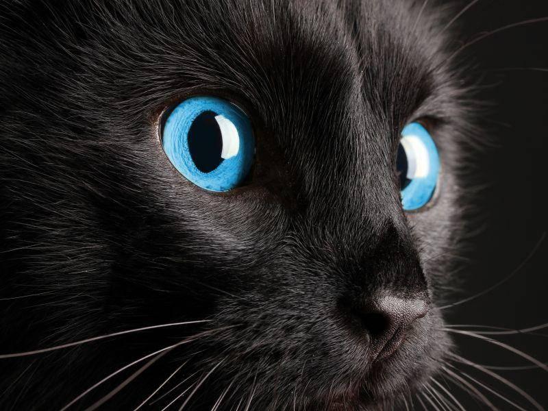 Sind diese Augen echt? Egal, sie passen perfekt zum Gruselfest — Bild: Shutterstock / Africa Studio