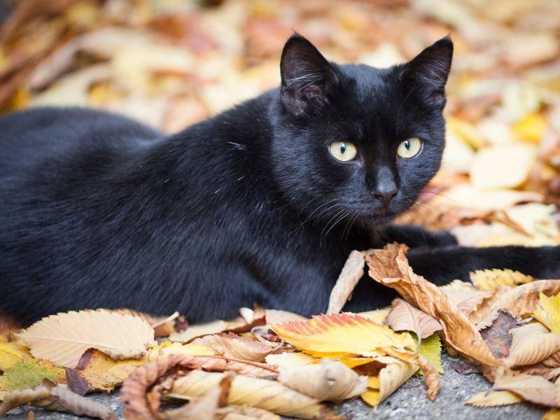 Perfekte herbstliche Kulisse für eine Katze zu Halloween — Bild: Shutterstock / Kateryna Yakovlieva