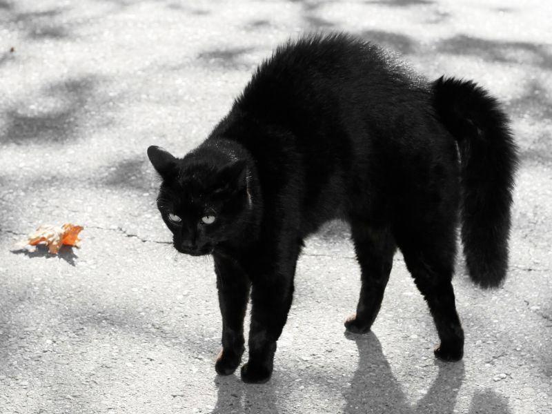 Katzenbuckel! An Halloween besonders gruselig — Bild: Shutterstock / Joy Brown