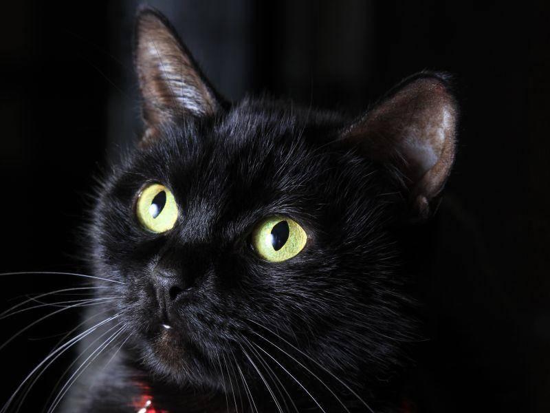 Schwarze Katze, schwarzer Hintergrund: Die Letzte in unsere Runde! Happy Halloween! — Bild: Shutterstock / Tatiana Morozova
