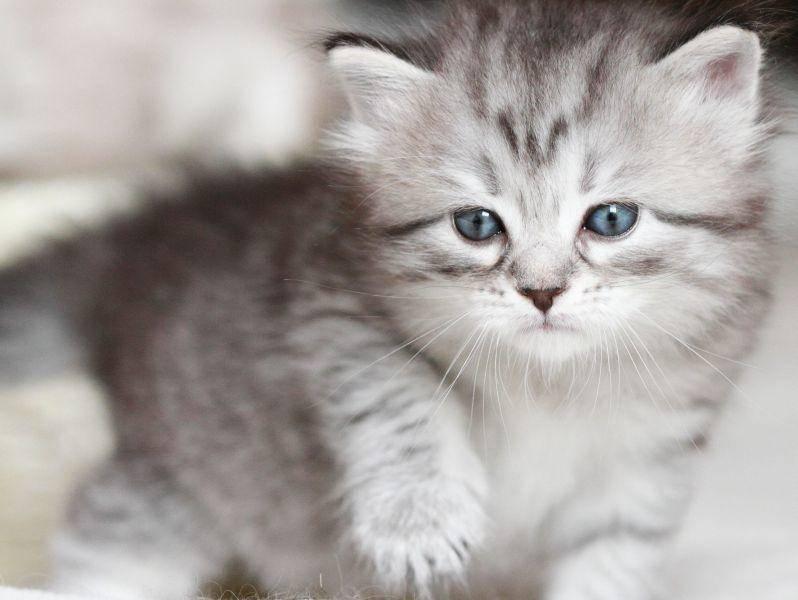 Als Baby klein und tapsig, ausgewachsen bis zu 8 kg schwer — Bild: Shutterstock / Massimo Cattaneo