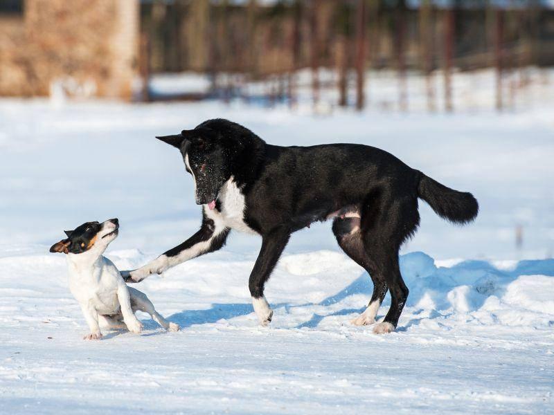 Spielen mit Freunden: Im Schnee besonders schön! – Bild: Shutterstock / Rita Kochmarjova