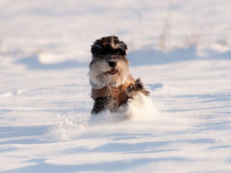 Diese Hunde sind sich einig: Winter ist ihre Lieblingsjahreszeit! – Bild: Shutterstock / Budimir Jevtic