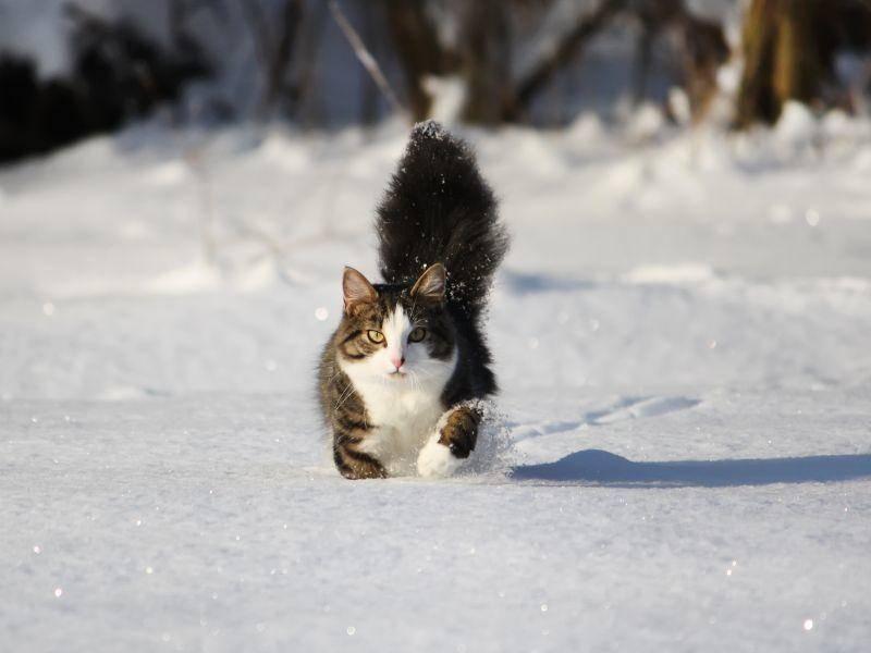 Der Neuschnee ist am schönsten: Auf Los geht's los! – Bild: Shutterstock / 8anju8
