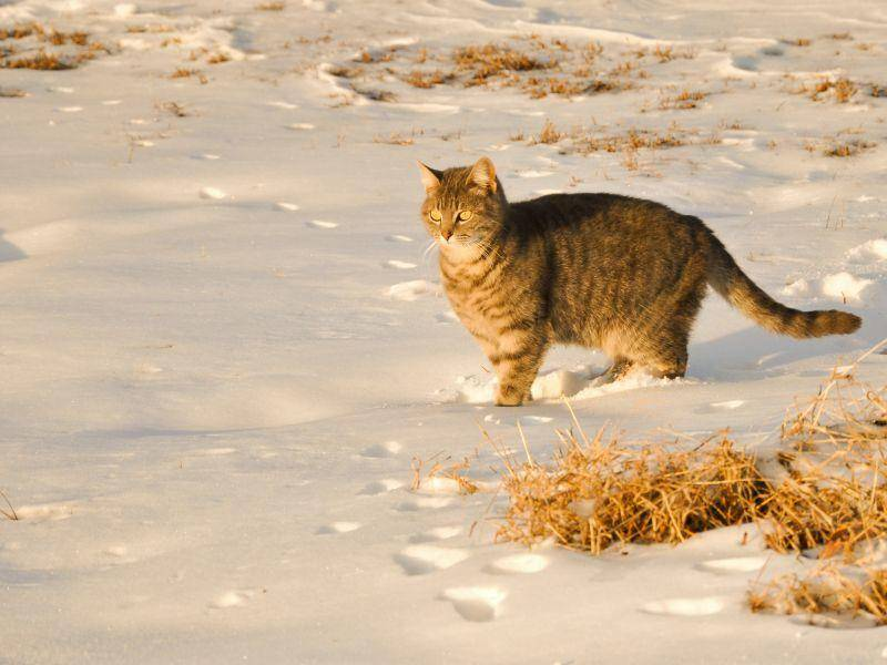 Katze-Schoen-Schnee-Sonne