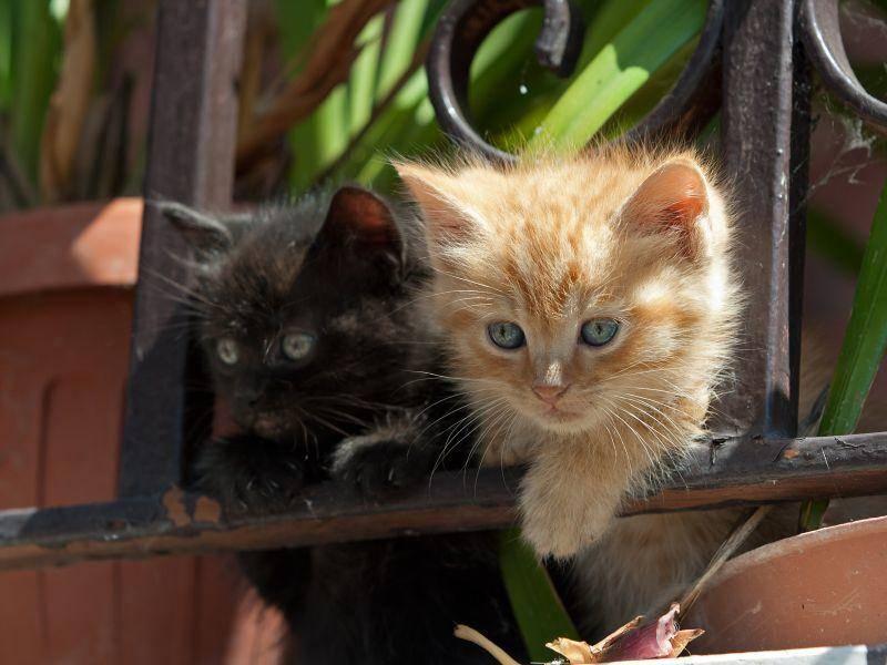 Erst Klettern, dann Toben: Diese verspielten Katzenbabys sind besonders hübsch — Bild: Shutterstock / Cristina Annibali