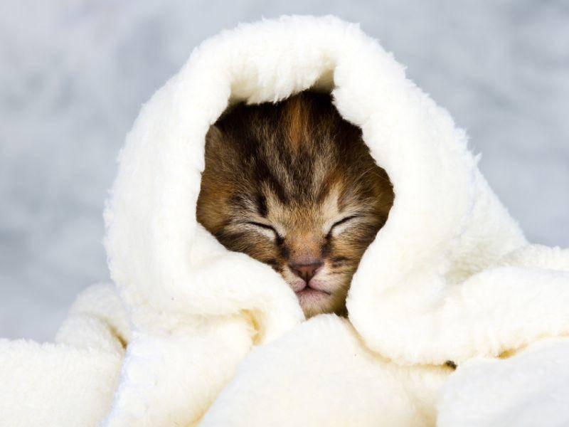 Im Winter kann es ganz schön ungemütlich werden – da hat sich dieses Tigerkätzchen schon einmal vorsichtshalber eingemummelt – Bild: Shutterstock / Alta Oosthuizen