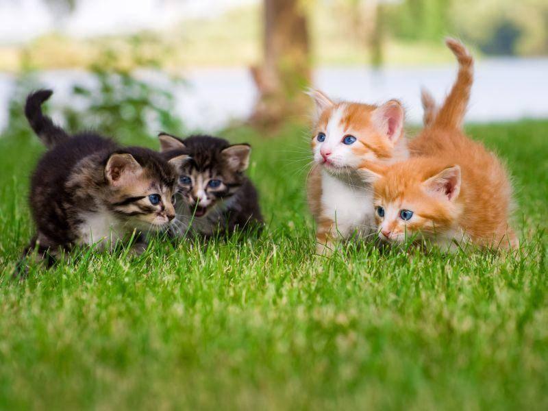 Versammlung! Diese süßen Babykatzen haben sich im Garten zum Toben verabredet! — Bild: Shutterstock / NotarYES