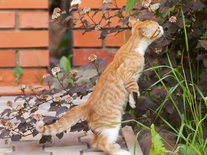 Süßes Katzenbaby: Vor dem Toben erst Mal ein bisschen die Natur genießen — Bild: Shutterstock / Mitrofanov Alexander