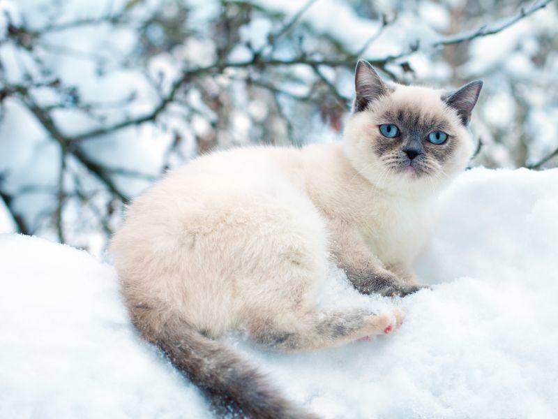 Verstecken spielen im Schnee, wer spielt mit? – Bild: Shutterstock / vvvita