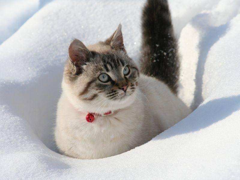 Huch, da war der Schnee wohl tiefer als gedacht, süße Katze! – Bild: Shutterstock / karl umbriaco