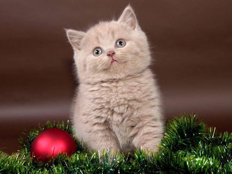 Total gemütlich für kleine Katzen: Die Weihnachtsdeko – Bild: Shutterstock / Irina Zhuravlova