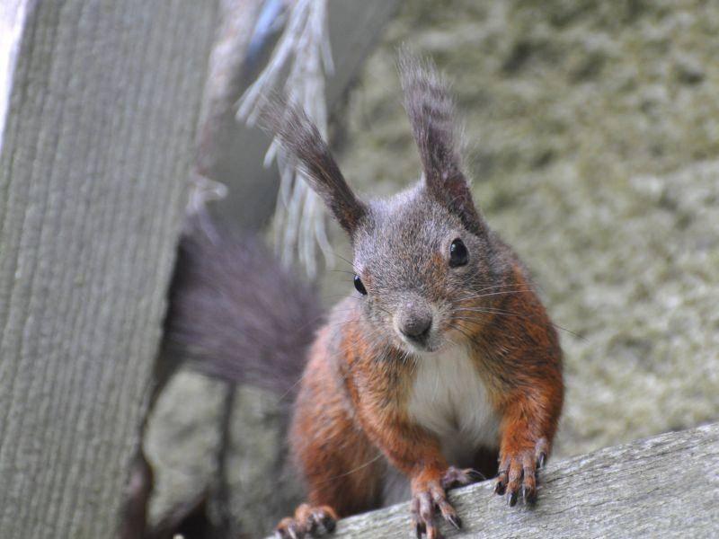 Eichhörnchen sind bekannt für ihre lustige Art und ihre Neugier – Bild: Shutterstock / A_Lein